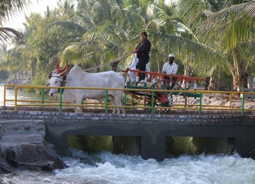Bullock Cart Ride At Meher Retreat
