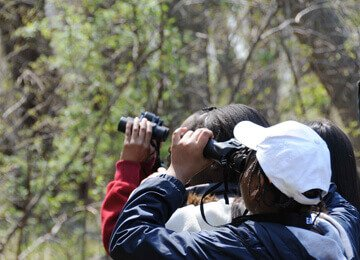 Bird Watching At Meher Retreat
